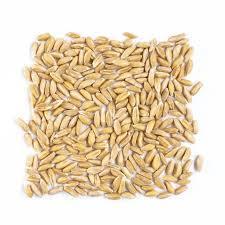 grano-avena-ecologico