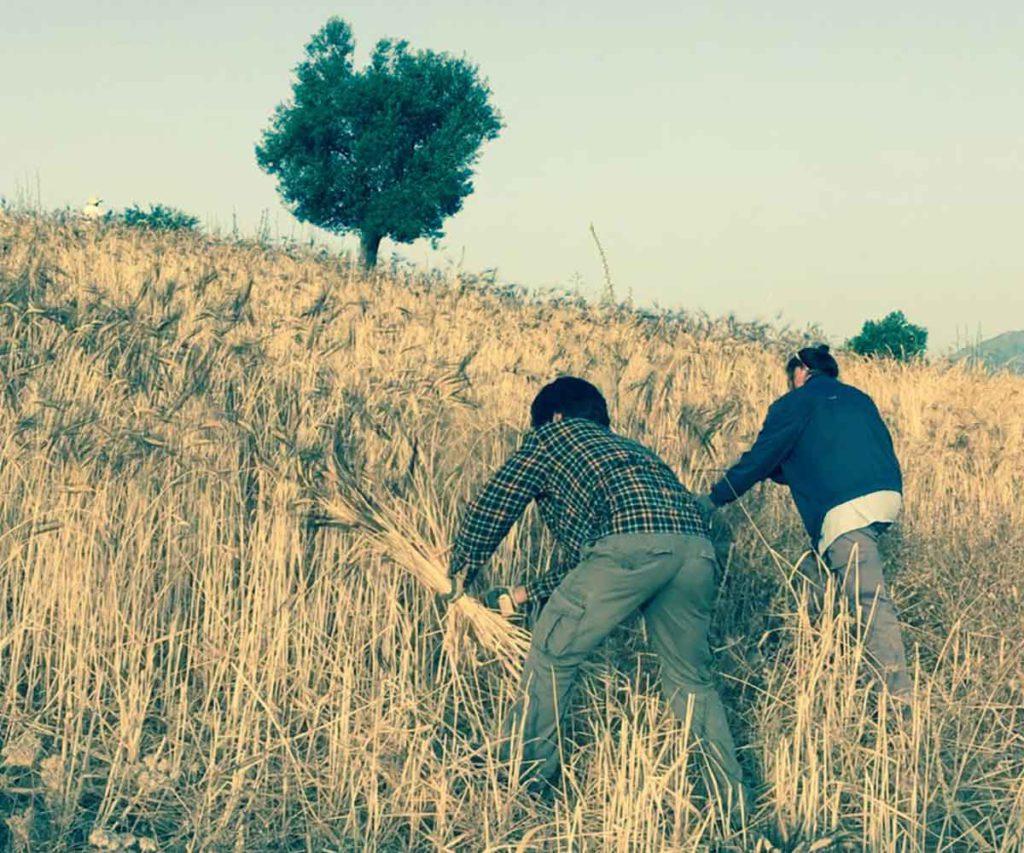 molino-trigo-ecologico